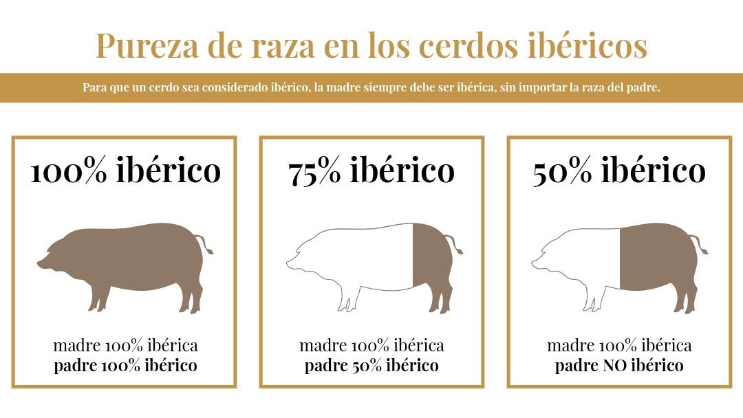 Pig breeds: the Iberian pig